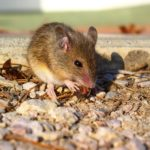 mouse-1645120_1280