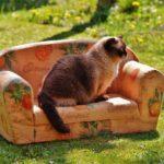 sofa-1349186_1280